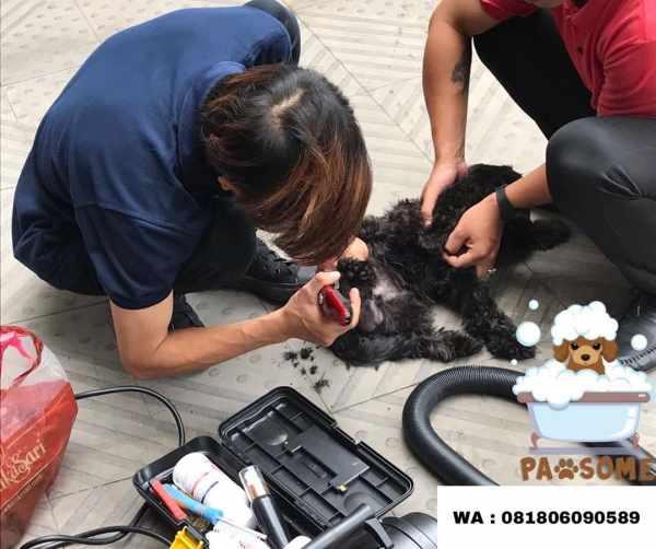 Jasa Grooming Anjing jakarta yang Profesional
